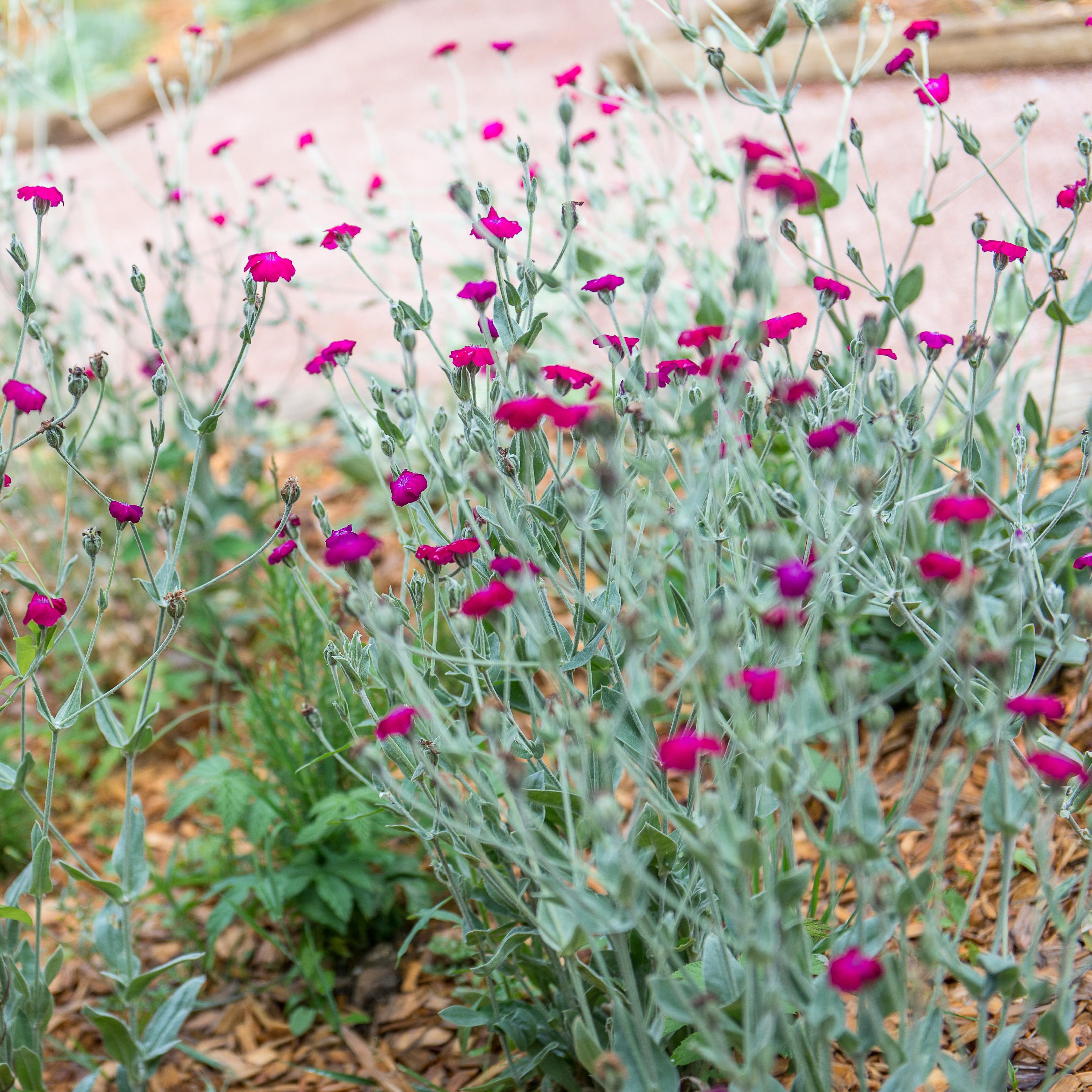 jardin-floral